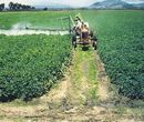 Chinese fungicide usage will up 10% in 2010