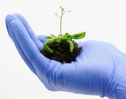 Wynca made a breakthrough in glyphosate manufacturing technology