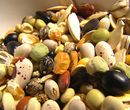 China has become the world's second largest seed market