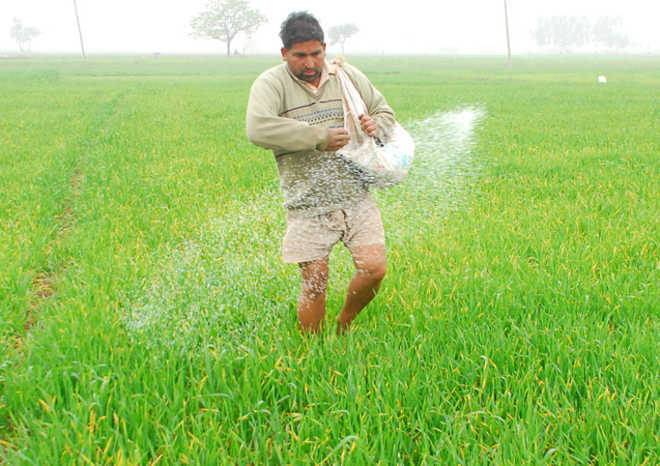DAP fertiliser rates increased, Indian farmers rue move would further inflate input cost