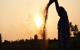 India's new agricultural policy after decades of farmer suffering