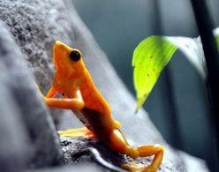 环保组织控告EPA保护野生动物不力
