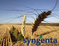 Syngenta's profit drops slightly in 2010