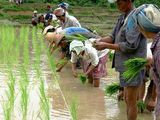 China: transforming demand for paddy insecticides