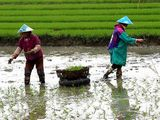 China to cut down 20% pesticide usage by 2015