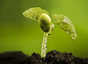 Ourofino推出种衣剂Terra Forte  助力巴西农民提高生产力
