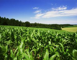 Abu Dhabi targets 25% reduction in agricultural chemicals by 2013