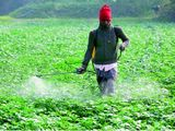 Indian illegal pesticide sale may cross Rs 2,000-cr mark this year