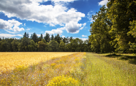 BASF commits to targets for boosting sustainable agriculture