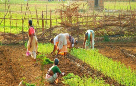 Indian Govt announces Rs. 510.3 crore for 14.5 lakh farmers; important details inside