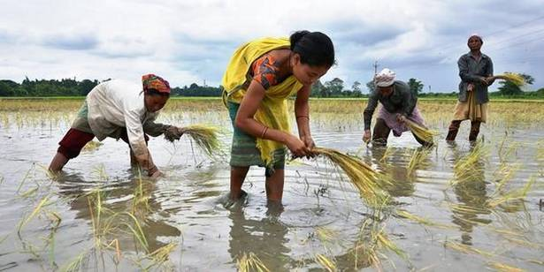 Corteva eyes rice, corn opportunity in India