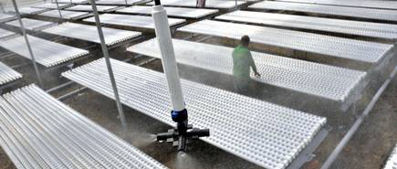 Hydroponic farming takes root in India