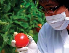 中国发布食品中阿维菌素等85种农药最大残留限量标准
