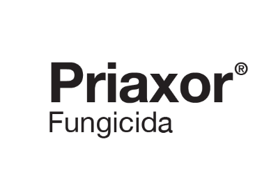 BASF launches Priaxor in Argentina to tackle soybean diseases