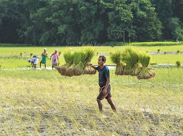 Indian agri-related stks in focus; FACT, Madras Fertilizers hit 20% upper circuit