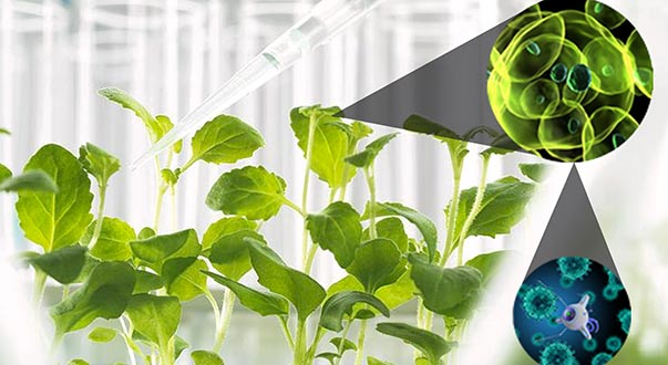 Nanotechnology in agriculture, why the use of this technology is lower when compared with other sectors?