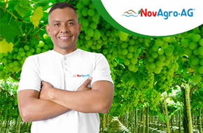 Novagro-AG: Accelerating organic transition towards production of healthy fruits and vegetables for families, environment and farmers