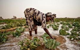 拜耳在南非推出数字农业平台Climate FieldView™