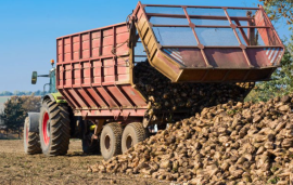 United Kingdom - Certis' insecticide InSyst receives emergency authorisation for sugar beet