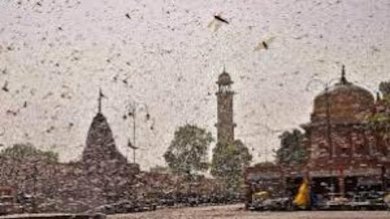UP: Aligarh district administration issues alert over likely locust attack in India