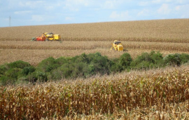 Brazil: Sindiveg sees lack of agri-inputs and risk to supply in Brazil
