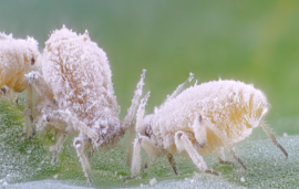 New broad type of resistance against insects found in plants