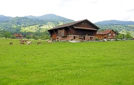 Switzerland to hold pesticide referendum