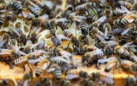 U.S. beekeepers continue to report high colony loss rates, no clear progression toward improvement