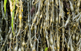 Koppert, Acadian Plant Health sign commercial partnership in Brazil, plan sales of R$50 million this harvest