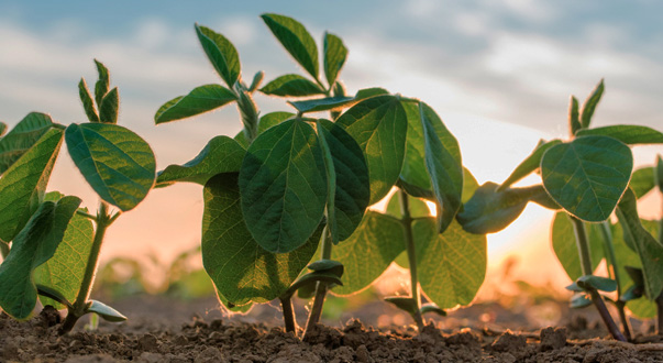 Sumitomo Chemical launches bionematicide for seed treatment in Brazil