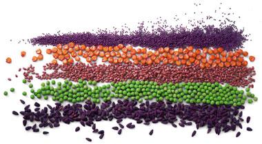 全球种子处理市场趋向分析及预测(至2018年)-----按处理类型(化学处理和非化学处理)、用途(杀菌剂、杀虫剂、生物防治和其他)及作物类型(谷物、油料作物和其他作物)进行分析