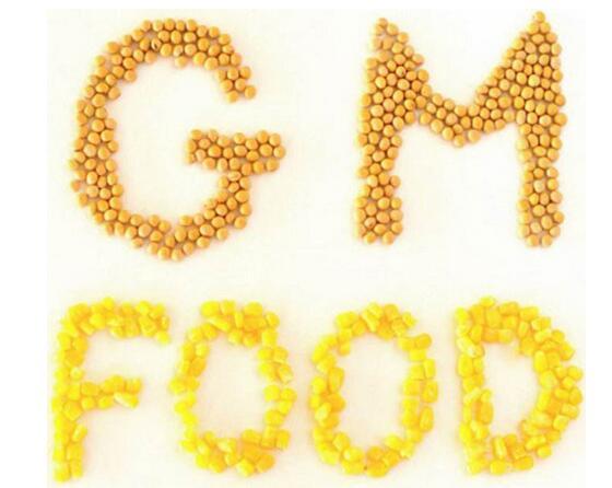 转基因食品的技术及全球市场分析报告