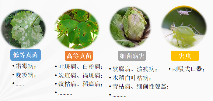 艾丽颖壮®可以帮助作物应对众多病害害等植保问题.png
