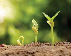 seed-germination.jpg